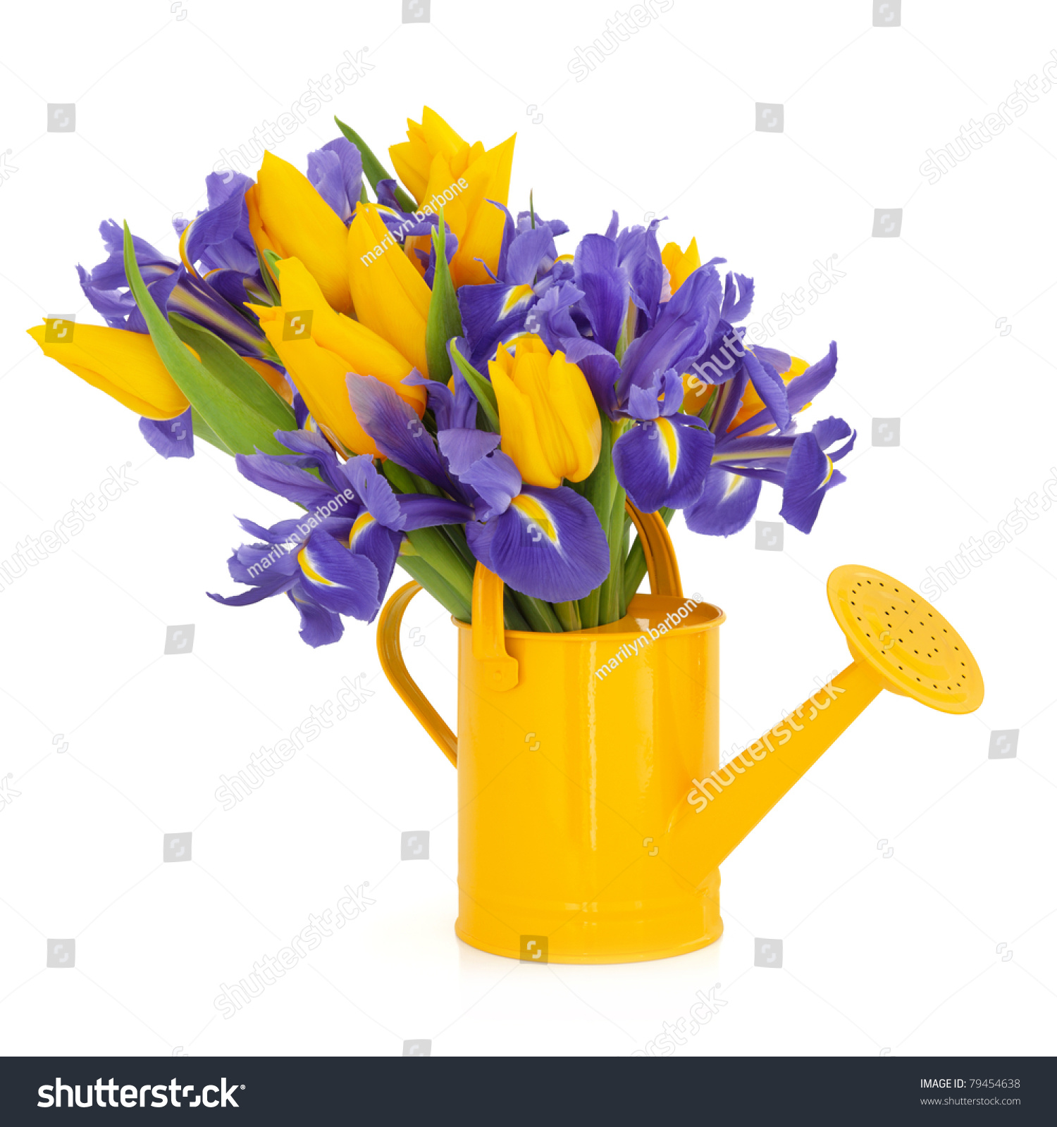 Yellow Tulip Blue Flag Iris Flower Stock Photo Edit Now 79454638