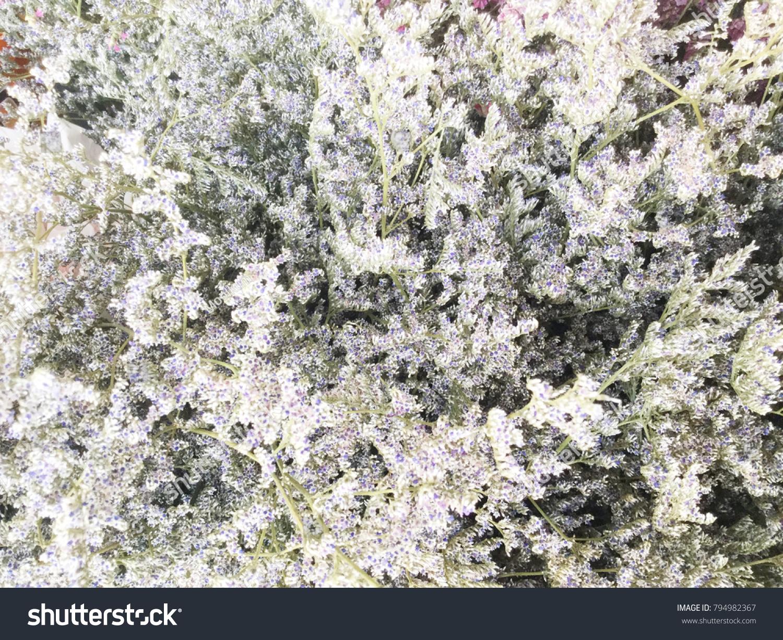 White Dried Wild Flowers In Buckets Dry Flower Vintage Style Ez