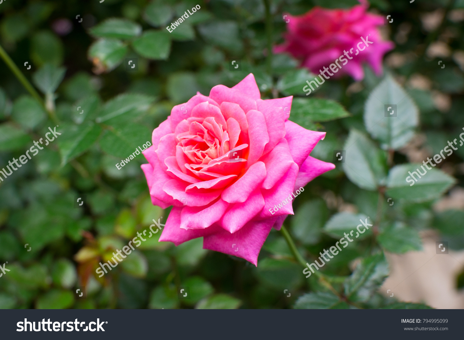 Beautiful Flower In The Park With Nice Bokeh Effect In The