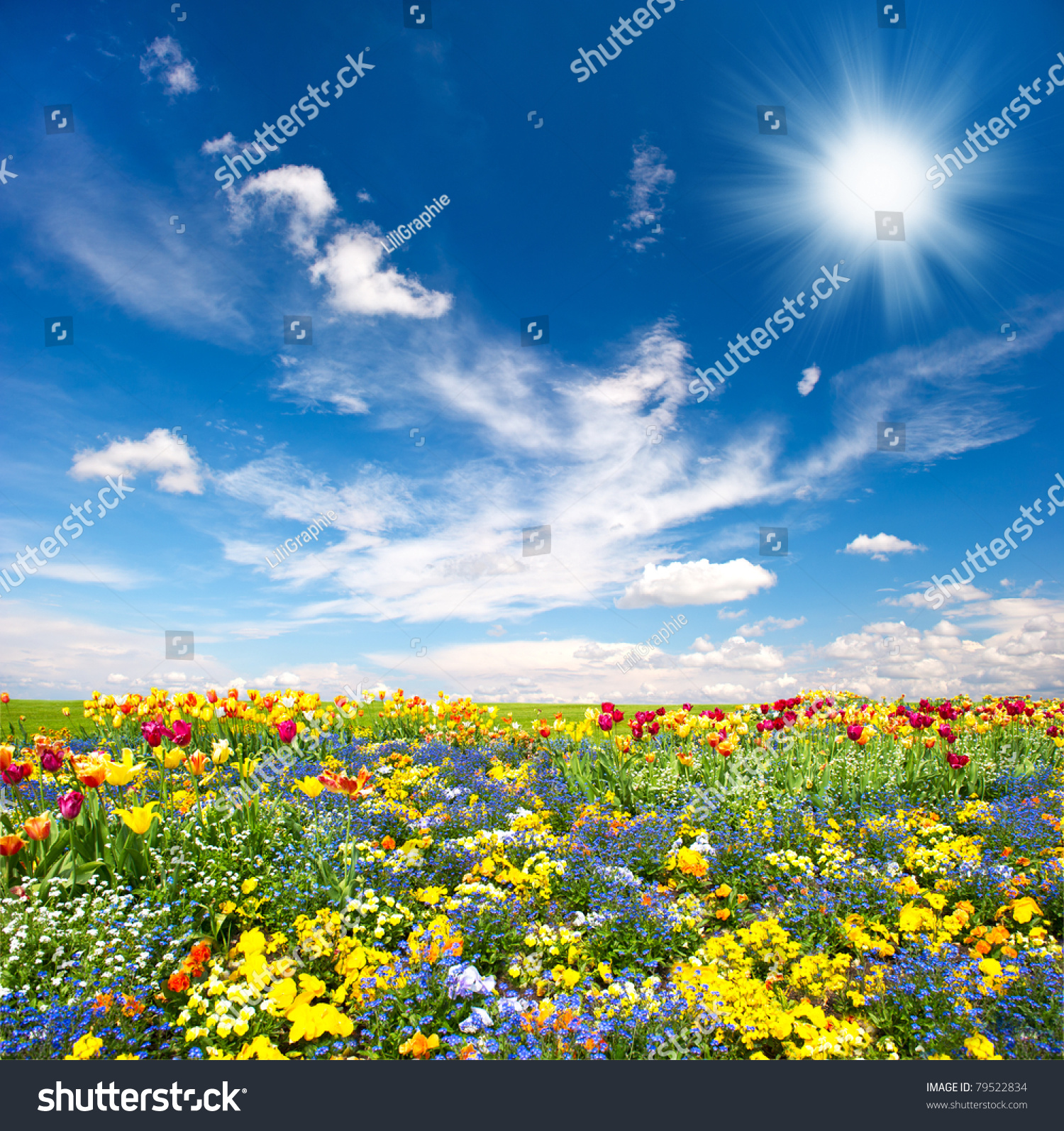 Flowerbed Colorful Flowers Over Blue Sky Stock Photo