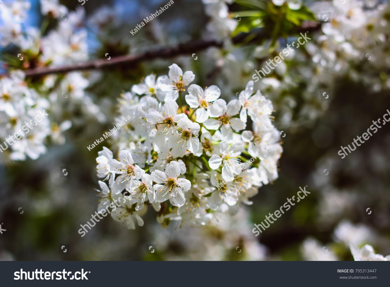 Beautiful Flowering Spring Plants Nature Awakens Ez Canvas