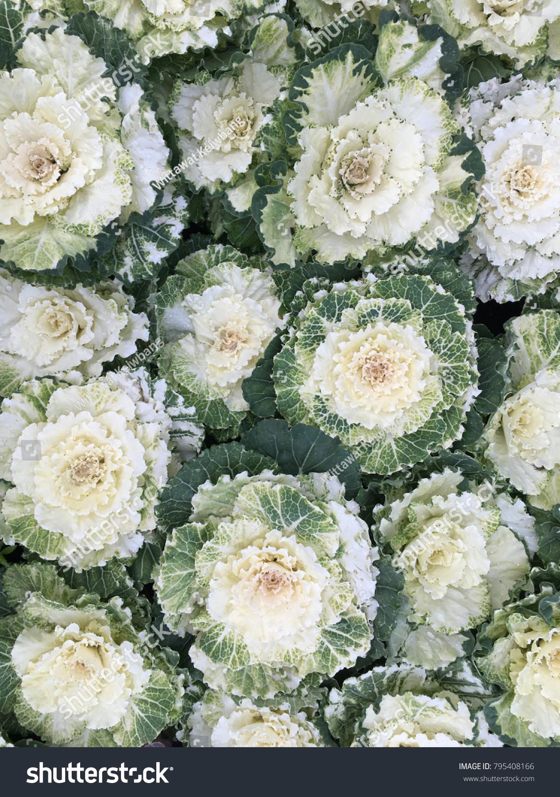 Texture White Vegetable Ez Canvas