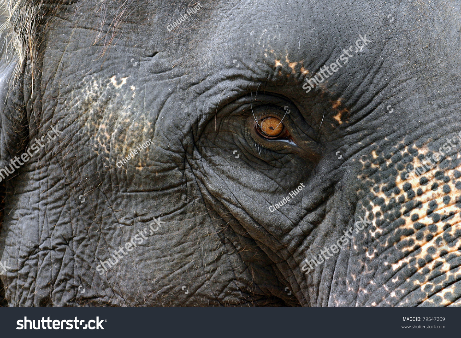 Asian elephant eye close-up in Thailand