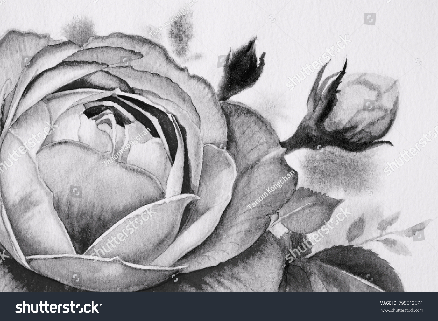 Black White Rose Flower Watercolor Paintings Stock Illustration