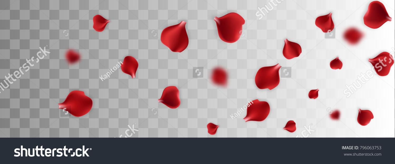 Red Rose Petal Transparent Background Vector Wedding Illustration