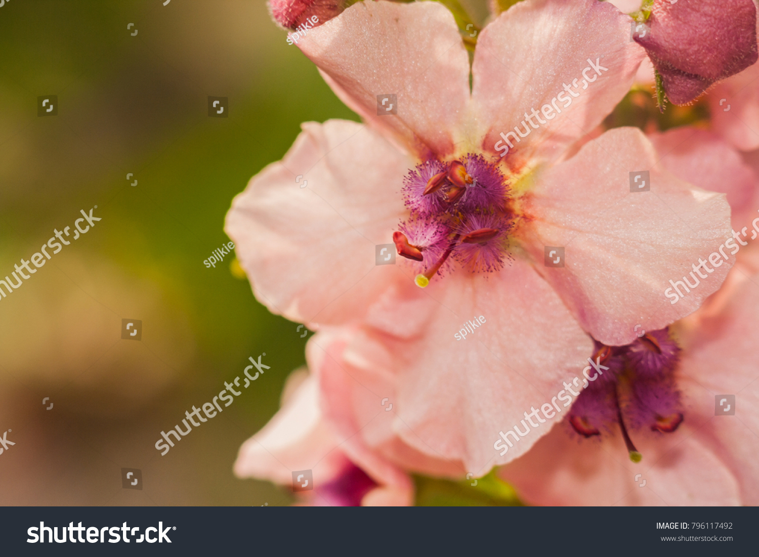 Macro Photo Of Small Light Pink Flowers With Purple Centre Ez Canvas