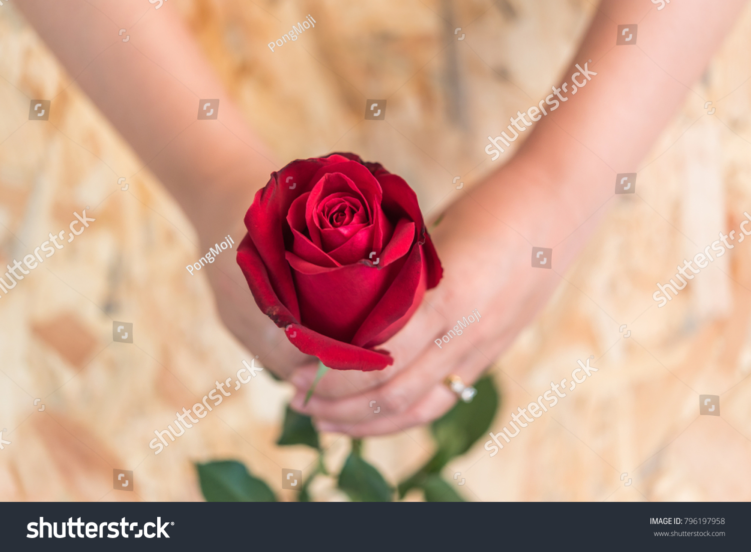 Red rose flower nature beautiful flowers stock photo edit now red rose flower nature beautiful flowers from the garden and human hand holding red rose flower izmirmasajfo