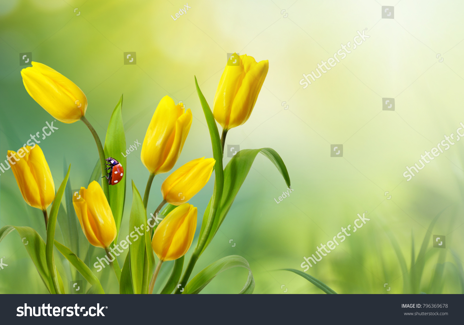 Spring Floral Template Background Free Space Stock Photo Edit Now