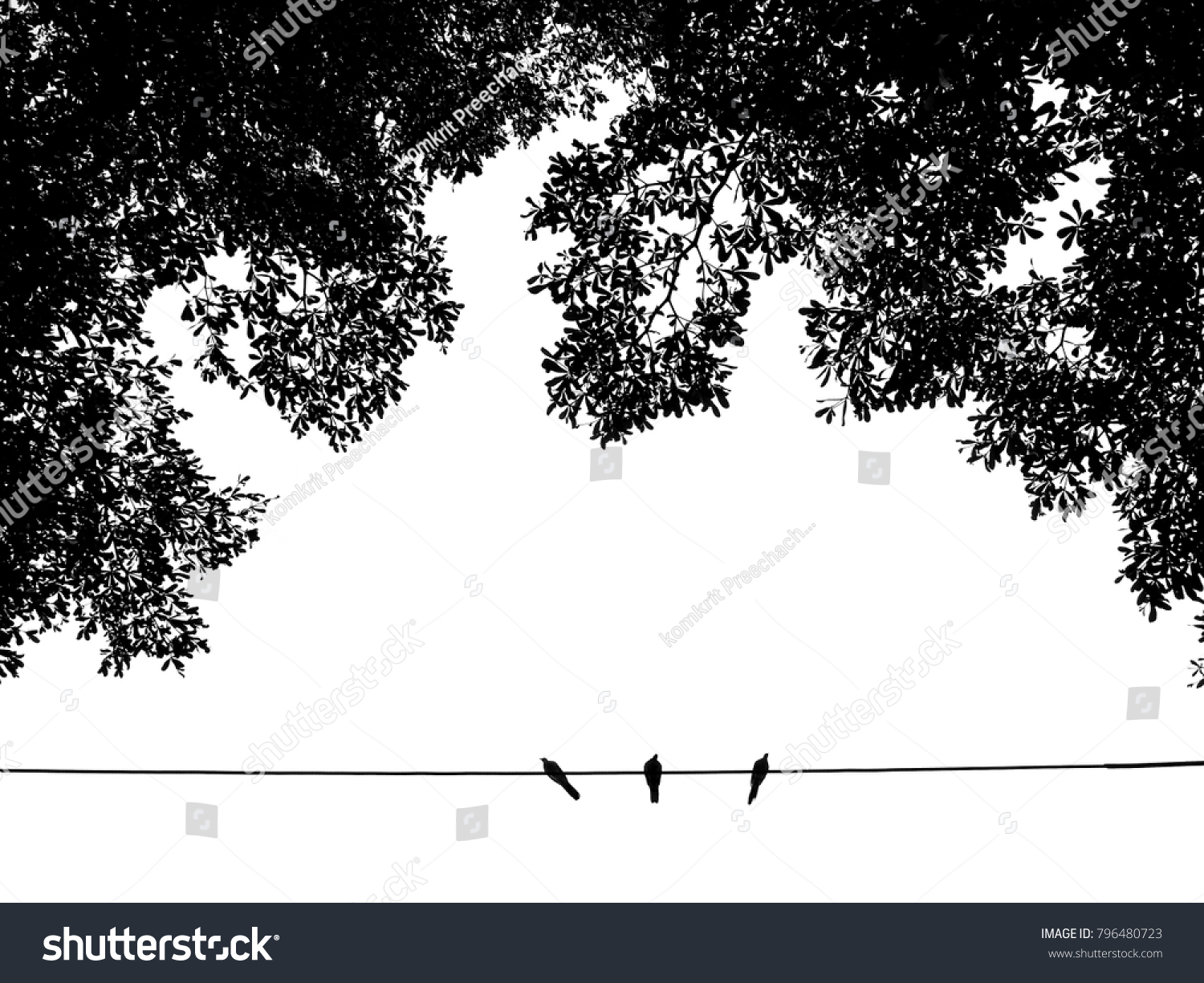 Silhouette Pigeon Bird On Wire Cable Stock Photo 796480723 ...