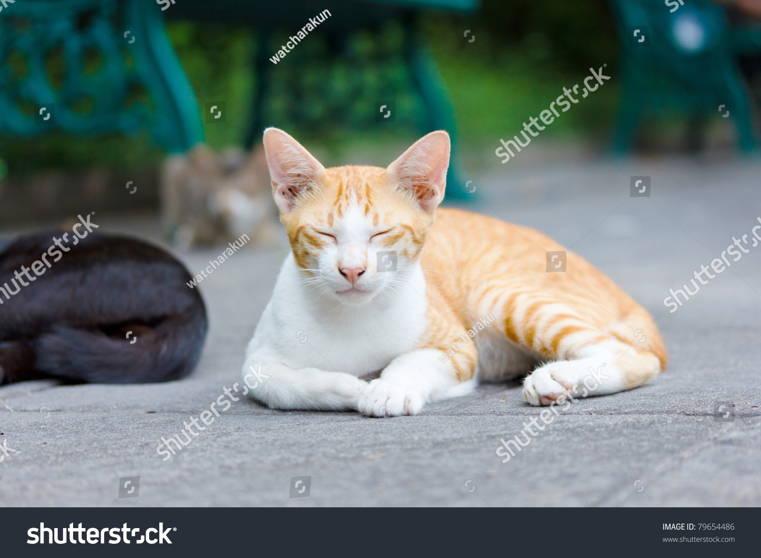 Cute Little Cat Sleeping Stock Shutterstock