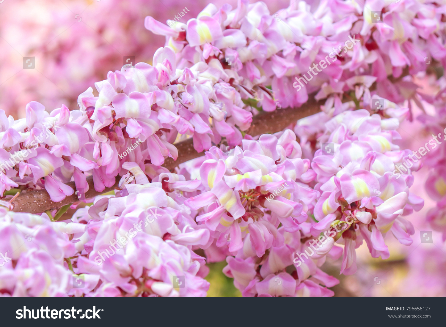 Beautiful Blooming Pink Flowers On Trees Stock Photo Royalty Free
