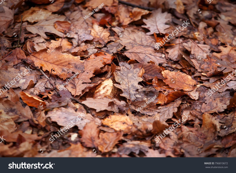 old autumn oak leaves  close up like background