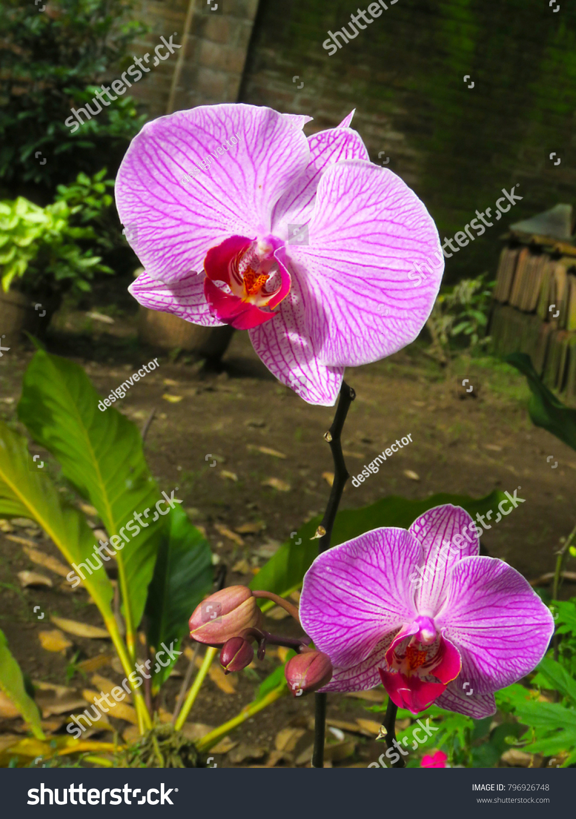 Jasmine flower purple beauty nature image stock photo edit now jasmine flower purple beauty nature image izmirmasajfo