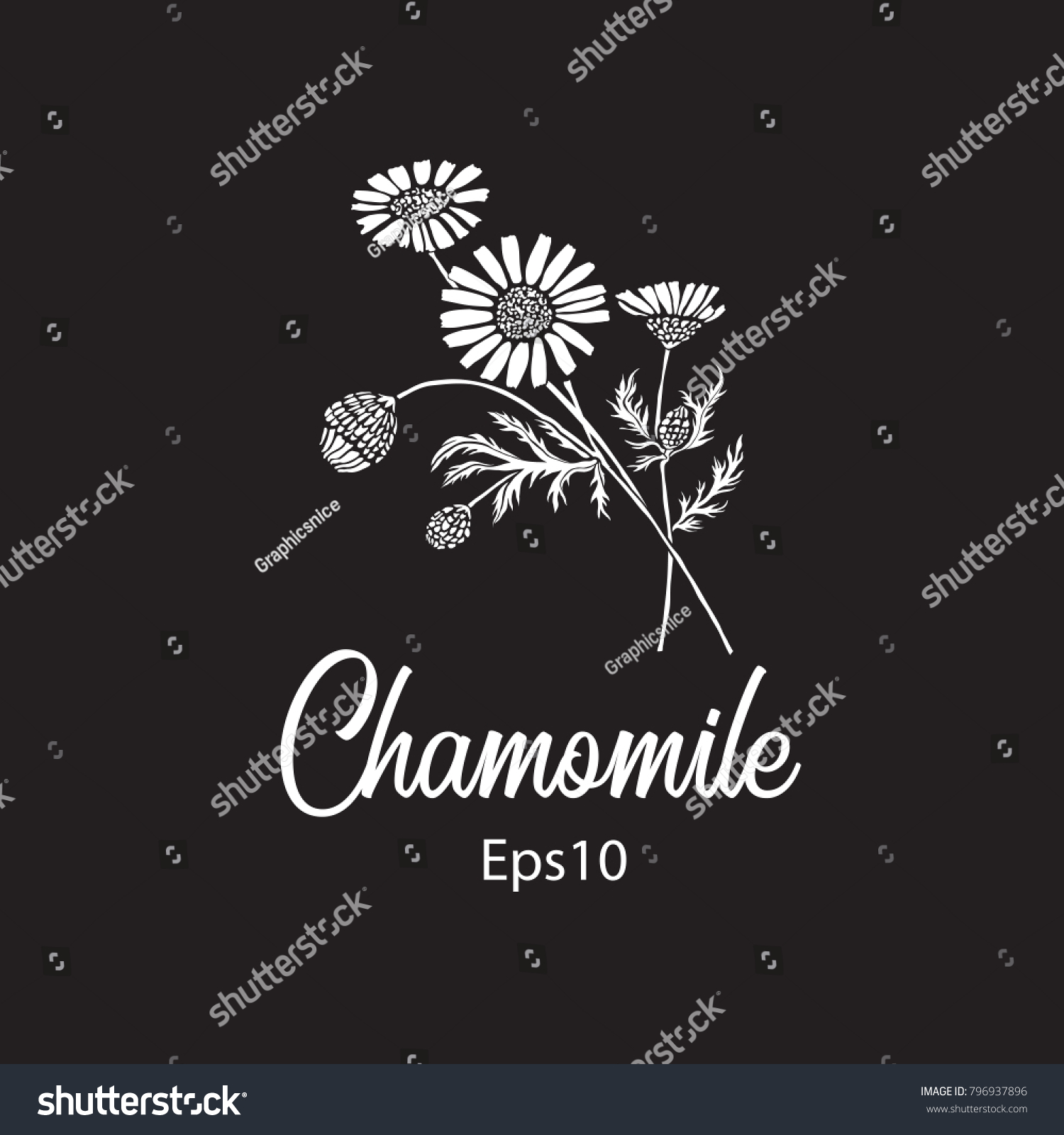 Vintage Chamomile Flower Bouquet On Black Stock Vector Royalty Free
