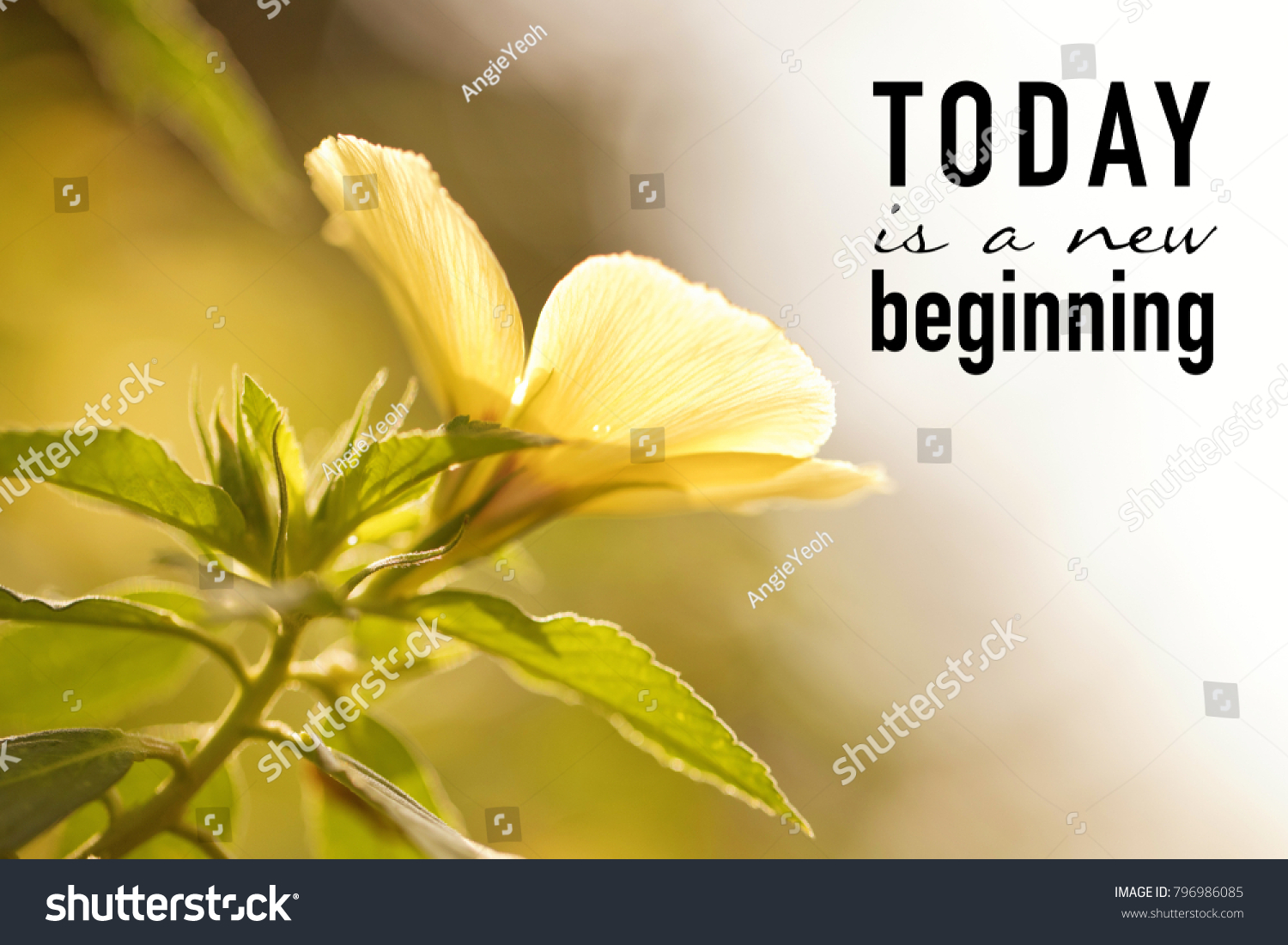 Inspirational Quote On Blurred Yellow Flower Stock Photo 100 Legal