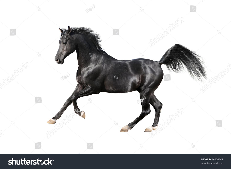 Black Arabian Horse Isolated On White Stock Photo Edit Now 79726798
