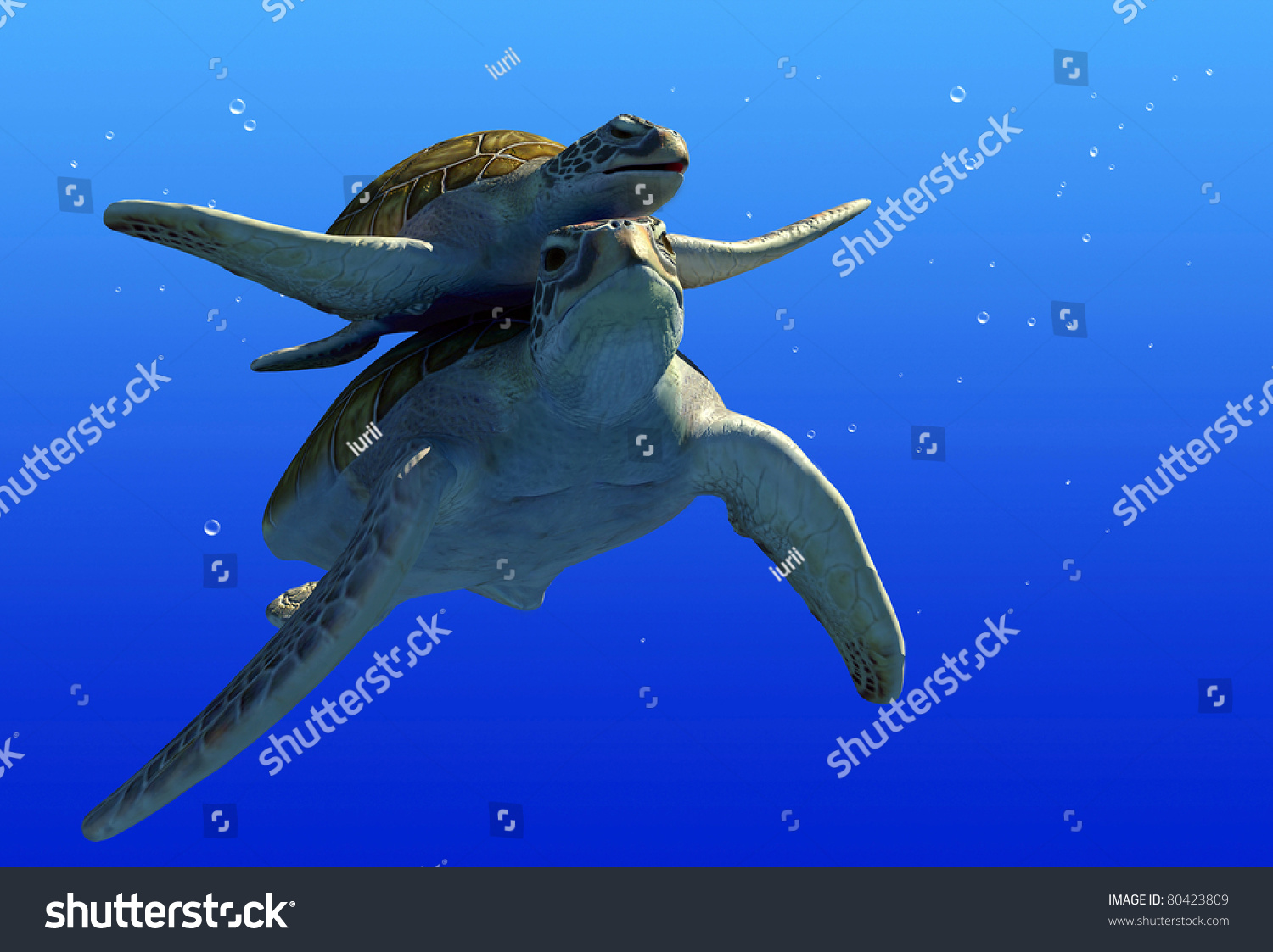 turtles under water on a blue background stock photo