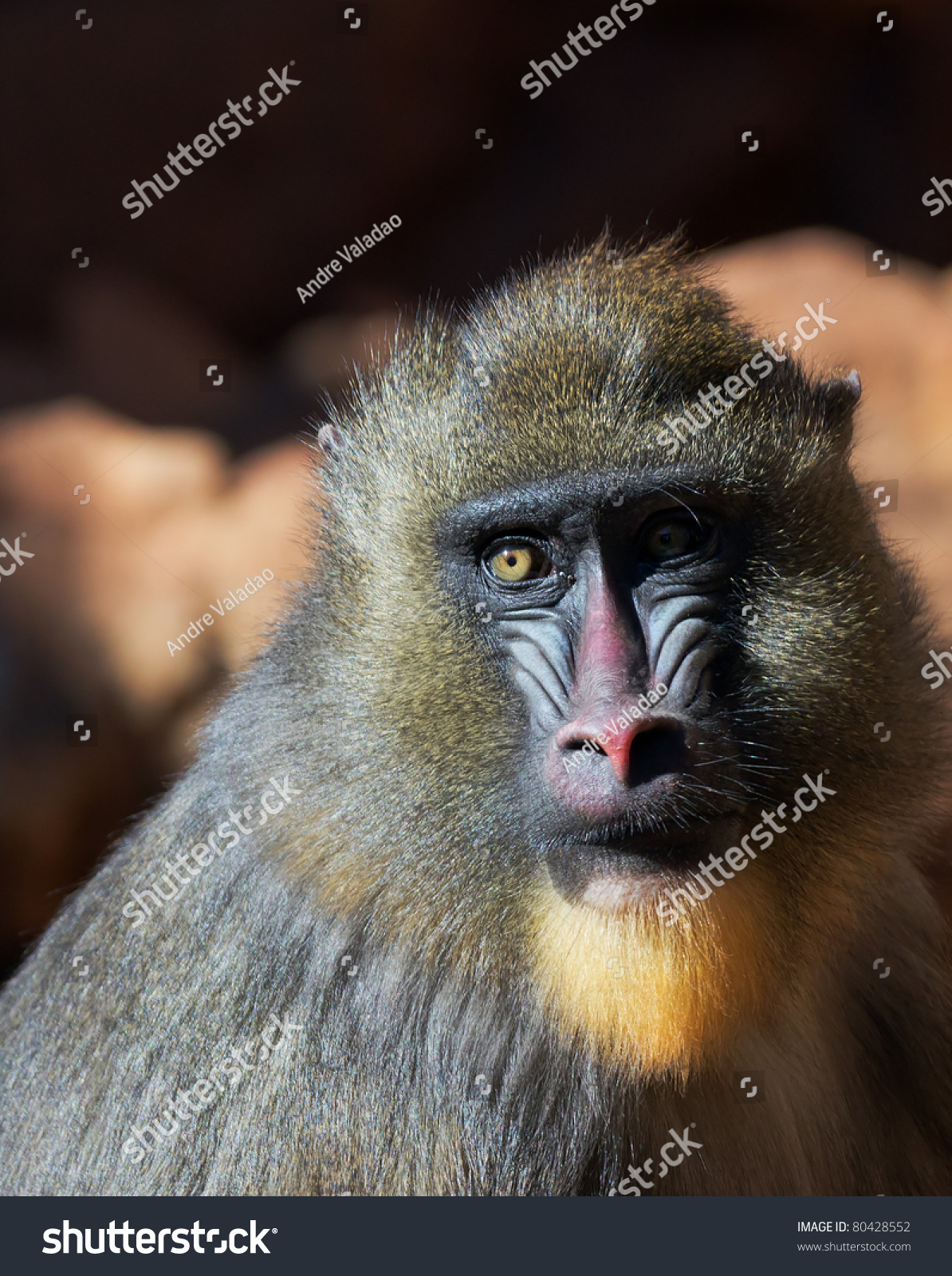 Colorful baboon face