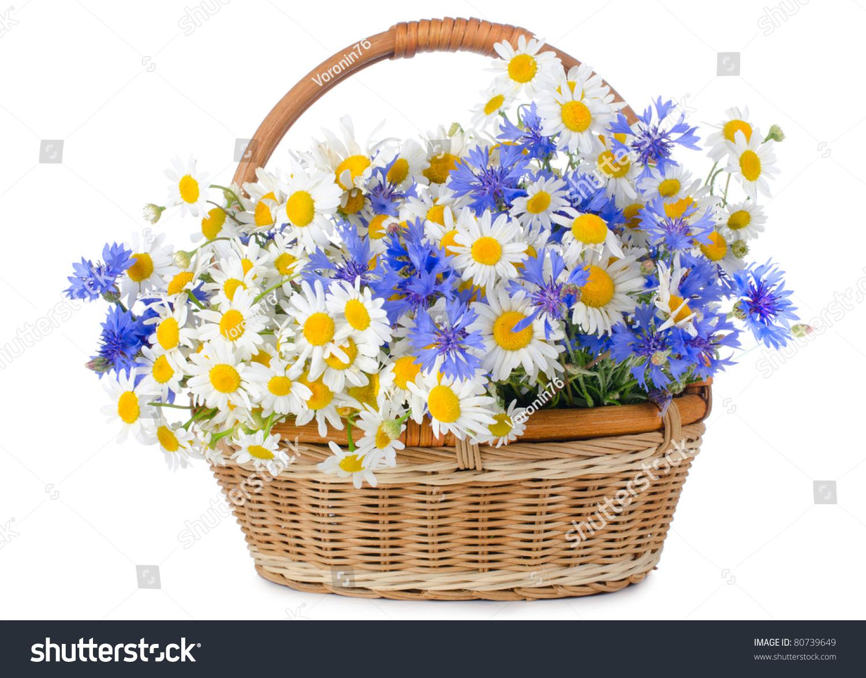 Beautiful flowers basket isolated on white stock photo royalty free beautiful flowers in basket isolated on white izmirmasajfo