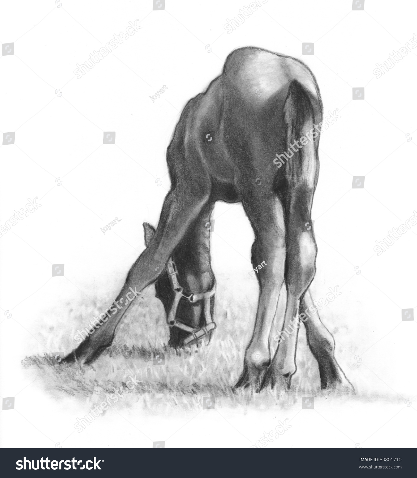Pencil Drawing Baby Horse Eating Grass Stock Illustration 80801710