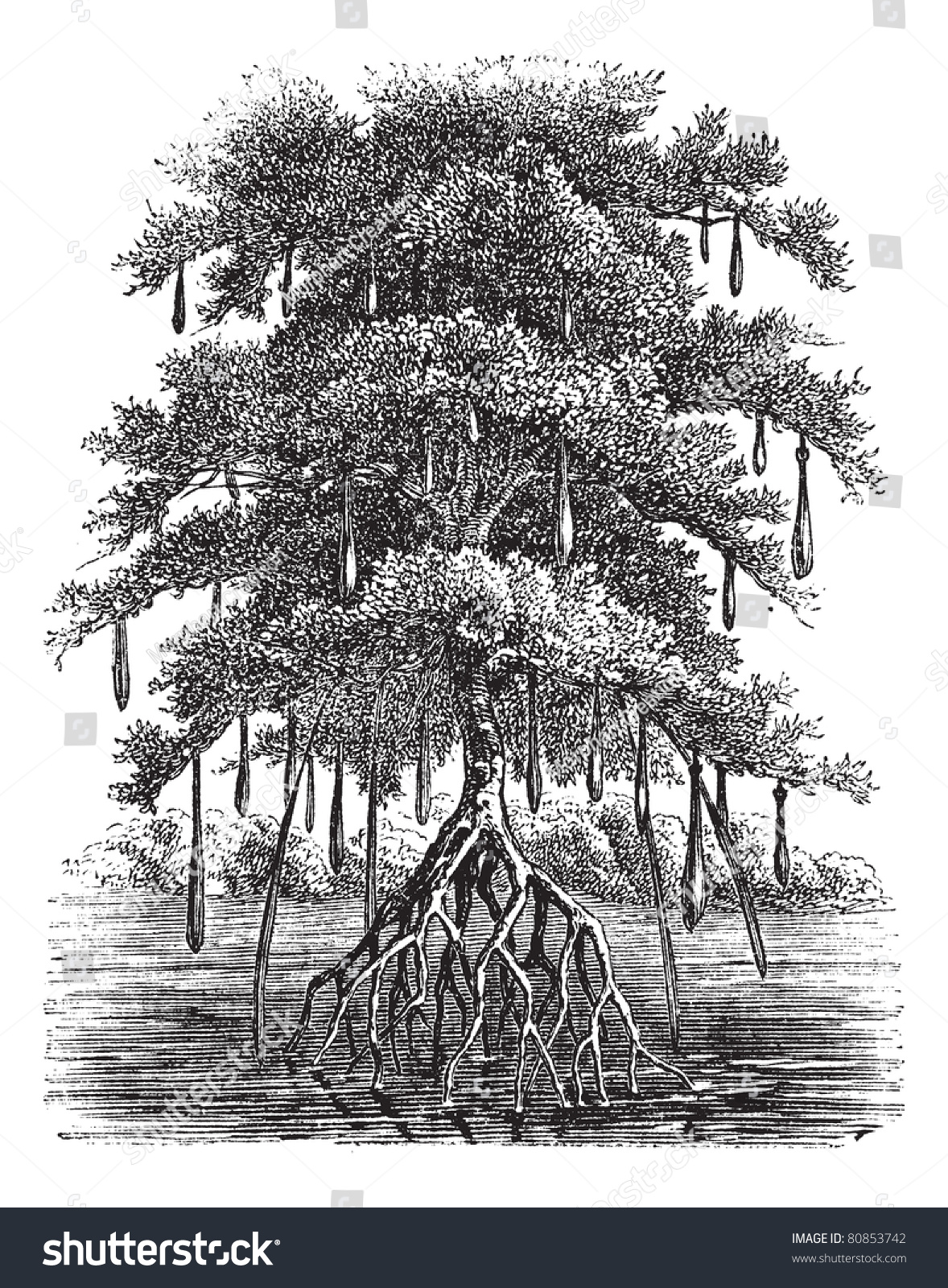 how to draw a swamp tree
