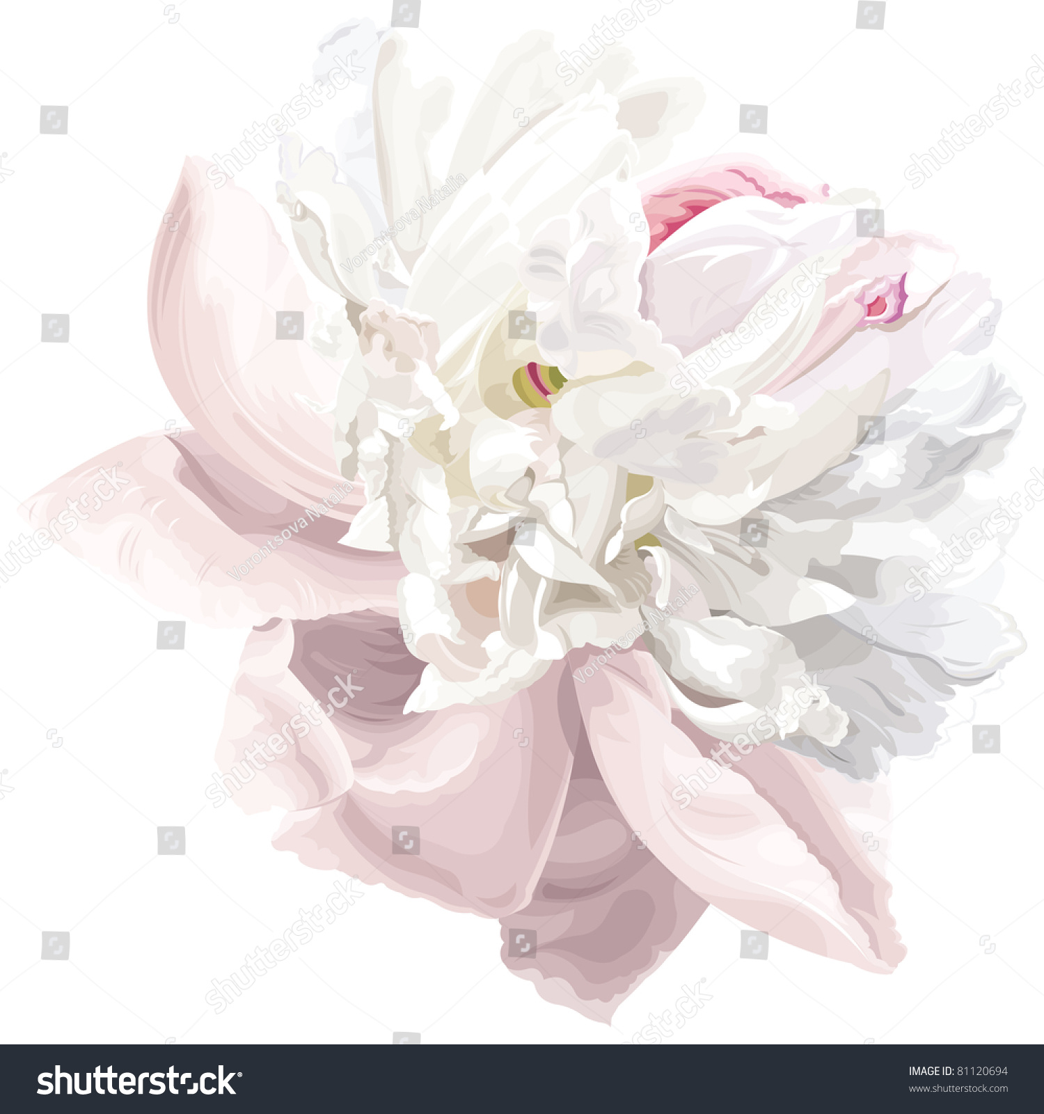 Royalty free luxurious white peony flower painted in 81120694 luxurious white peony flower painted in pastel colors 81120694 mightylinksfo