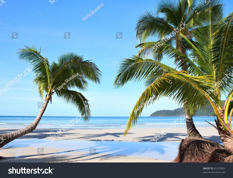 Summer Sunny Beach Tropical Palm Tres Stock Photo 81372901