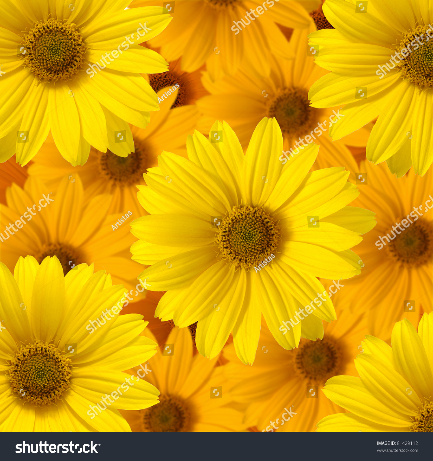 Yellow Daisy Flowerbackground Flowers Stock Photo Edit Now