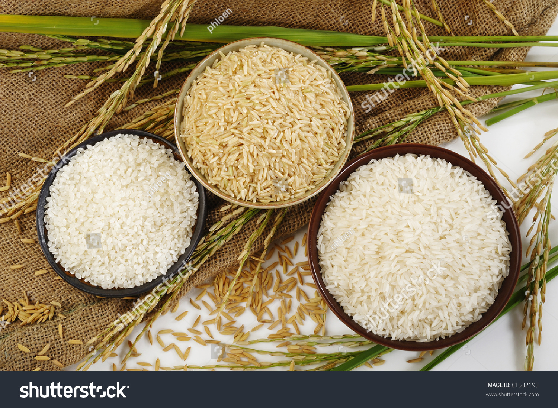 Paddy Ricebrown Ricewhite Rice Japanese Rice Stock Photo Edit Now 81532195