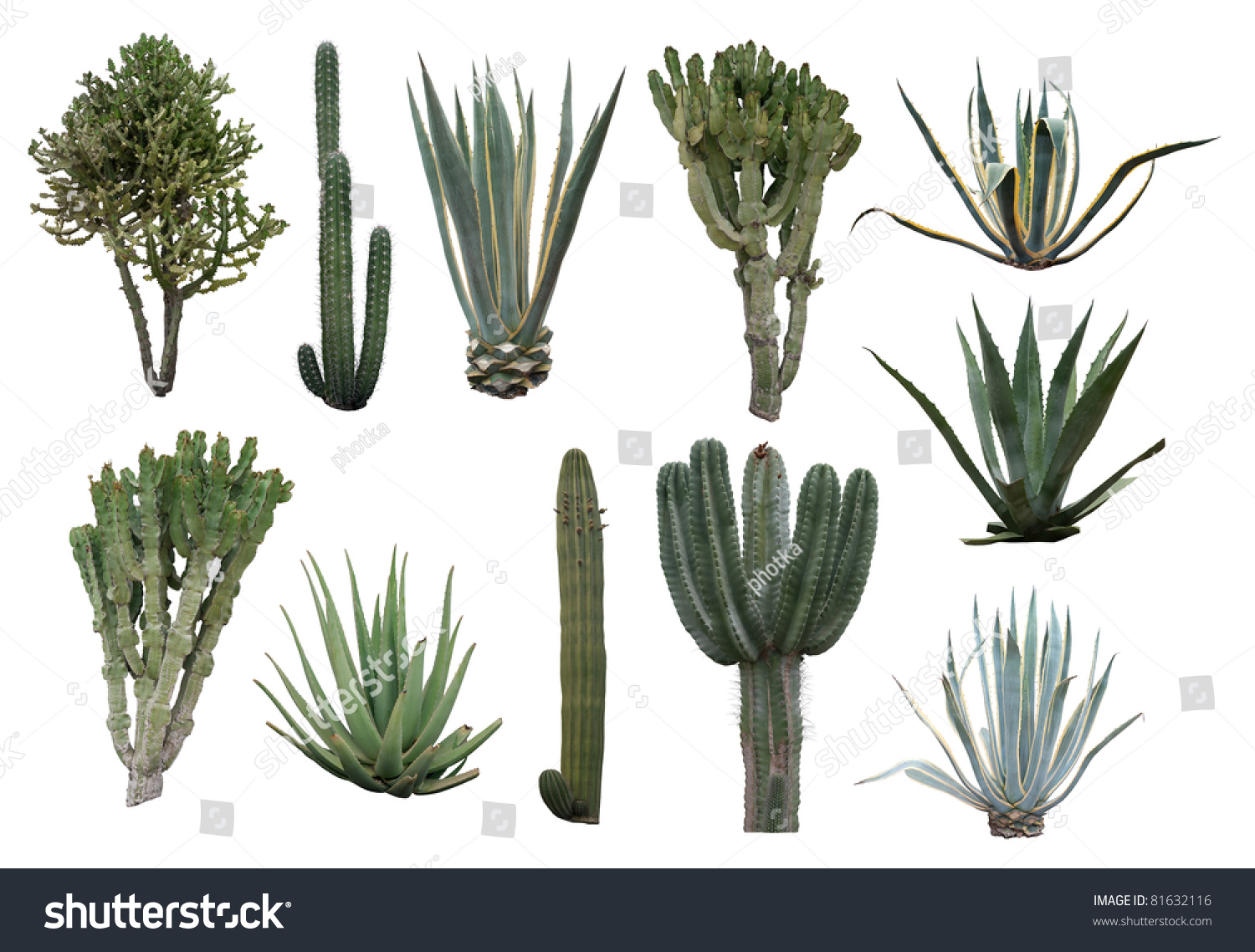 cactus collection isolated on white stock photo 81632116