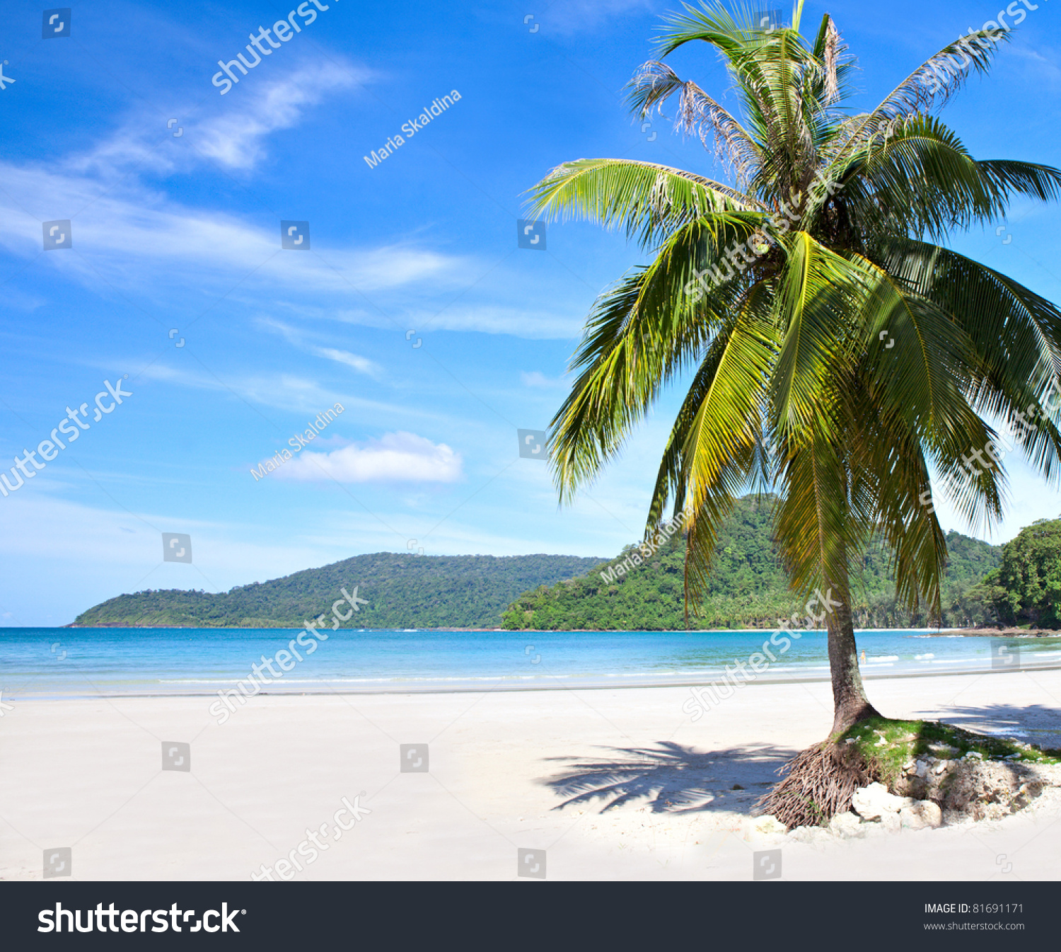 Exotic Beach: Summer Tropical Beach With Coconut Palm Trees Under Blue