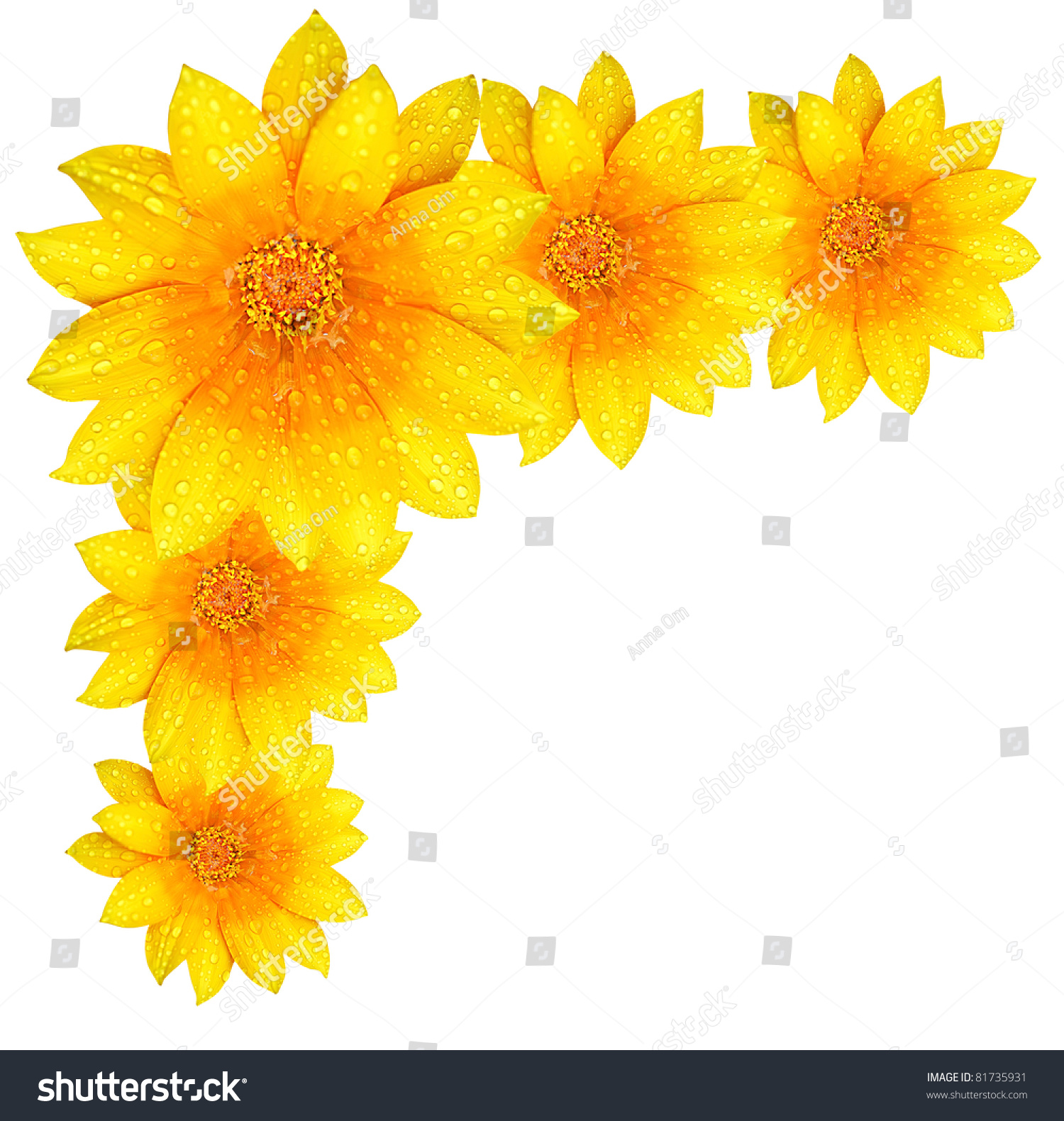 Royalty Free Fresh Yellow Flower Border Isolated 81735931 Stock
