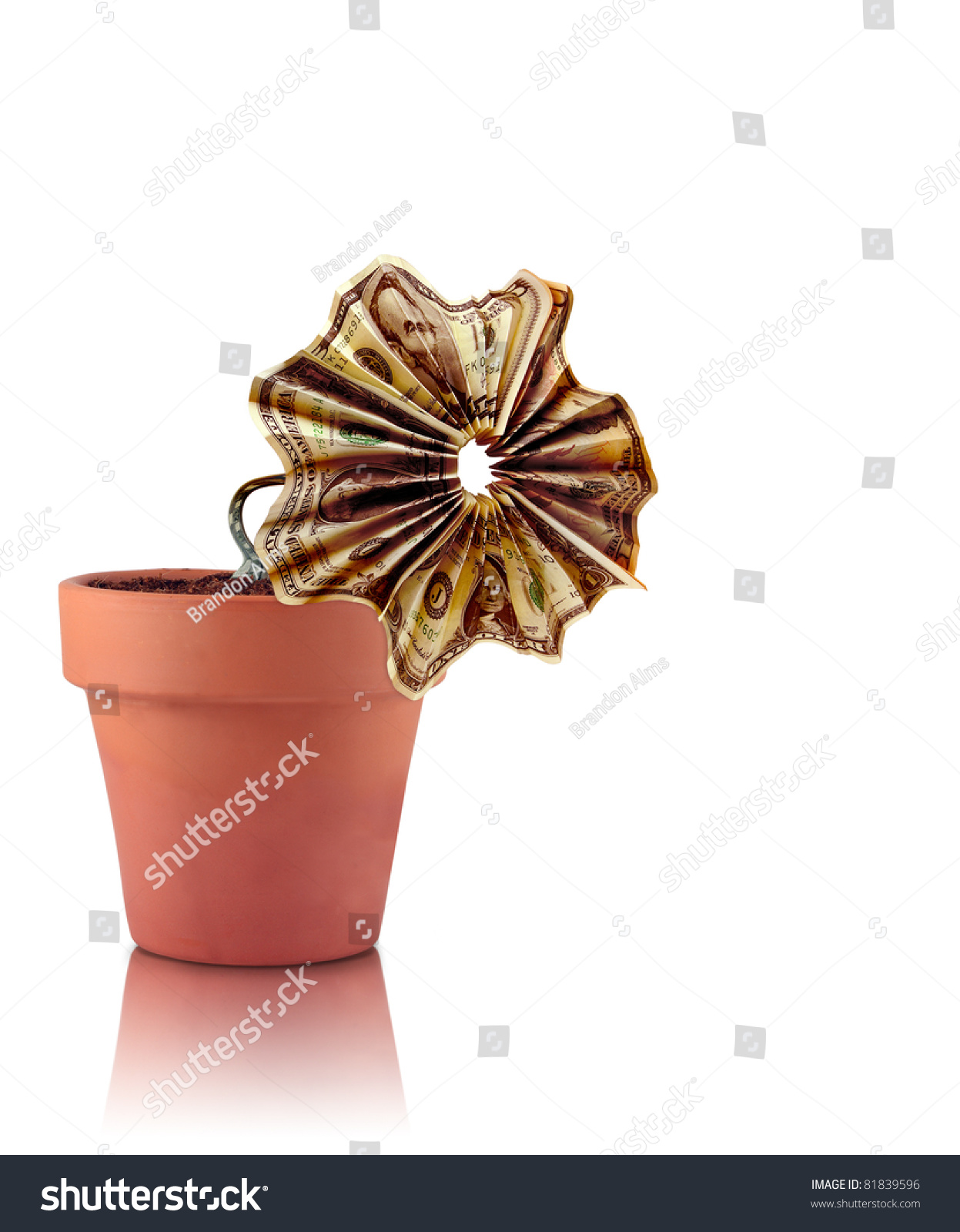 Withered Money Flower Stock Photo (Edit Now) 81839596 - Shutterstock