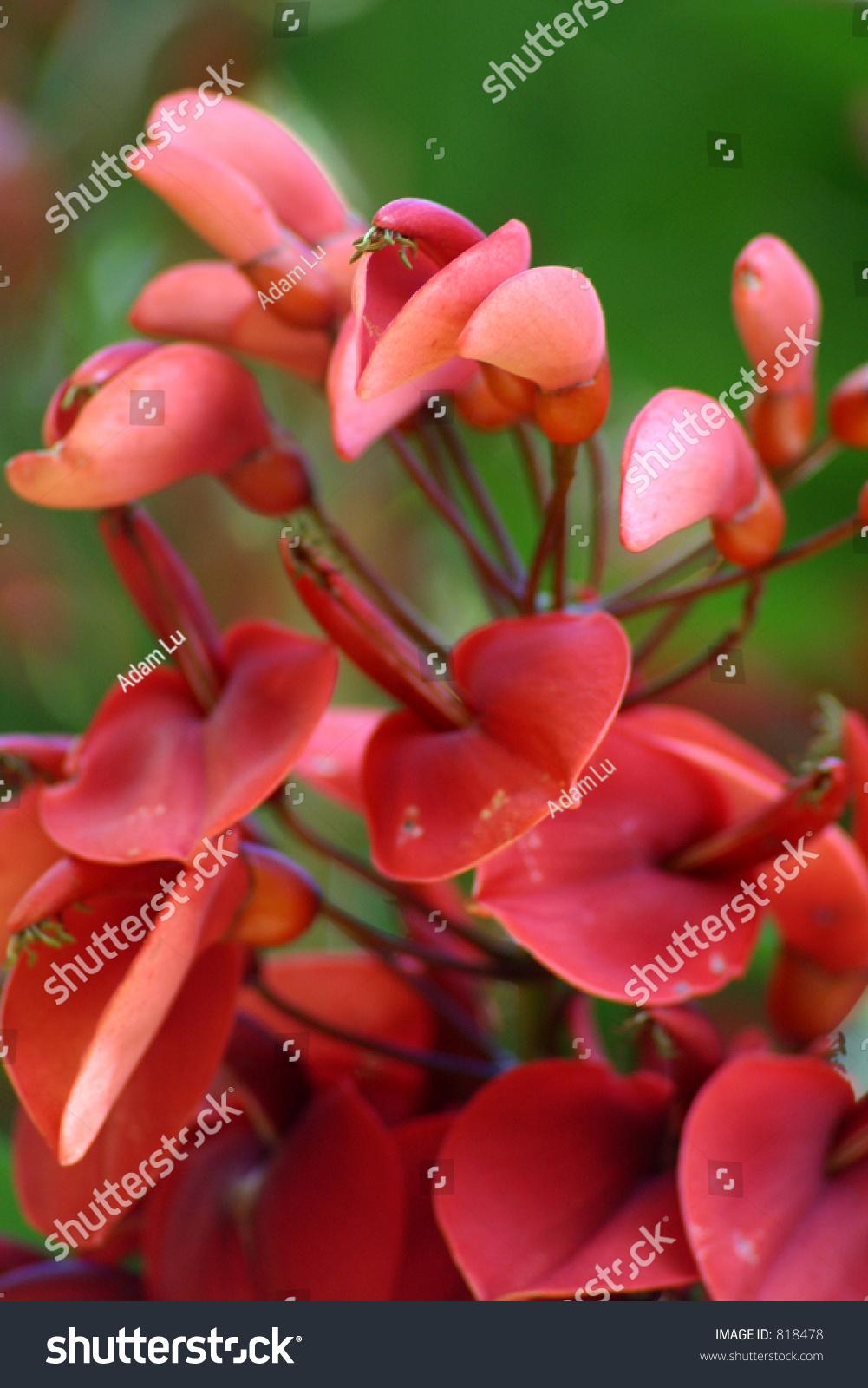 Beautiful exotic flower stock photo royalty free 818478 shutterstock beautiful exotic flower izmirmasajfo