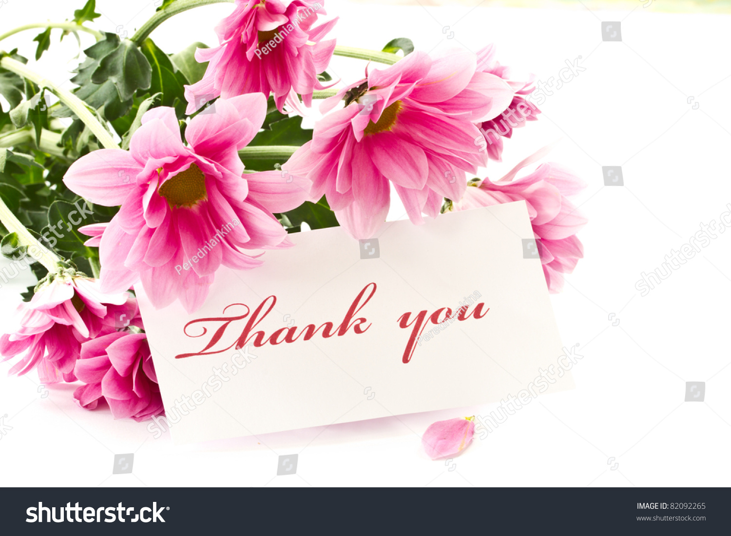 Say Thank You On Background Beautiful Stock Photo Royalty Free