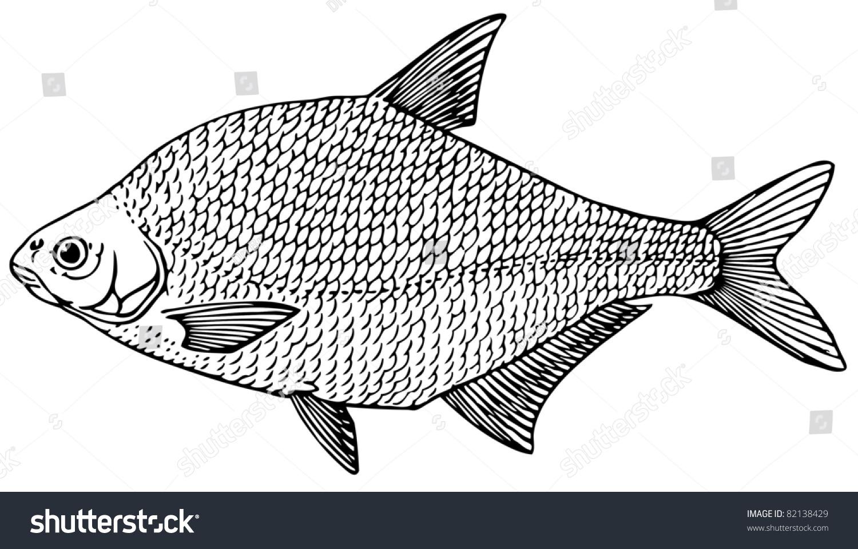 Freshwater fish bream - Fish Common Bream Freshwater Bream