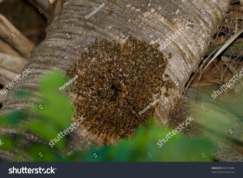 Yellow Jackets Take Over Woodpecker Nest Stock Photo 82372384 ...