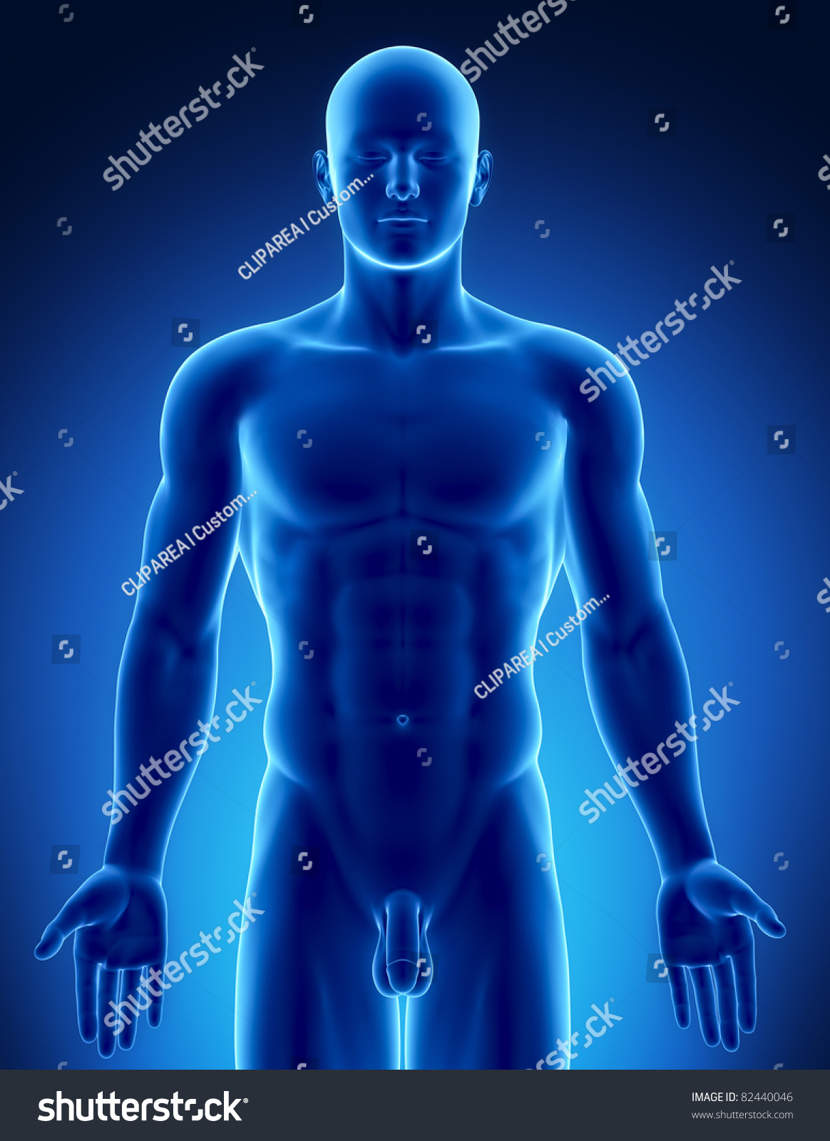 Male Anatomy Human Organs Xray View Stock Illustration 82440046 ...
