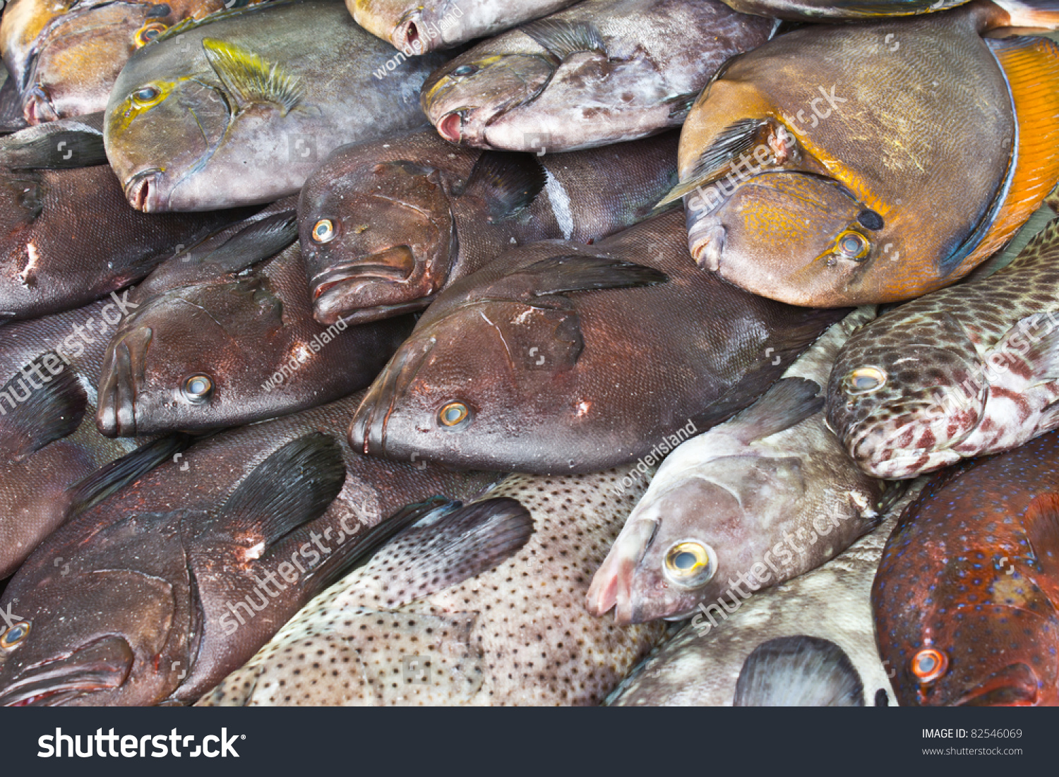 Sea product from the adaman sea in local fish market stock for Local fish market