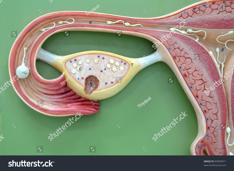 lechenie-esli-net-spermatozoidov
