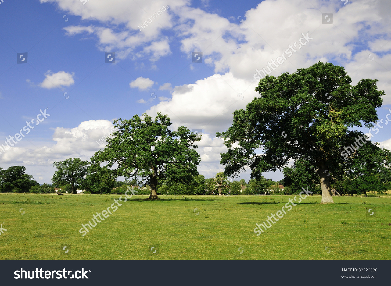 Landscape View Row Oak Trees On Stock Photo 83222530 - Shutterstock