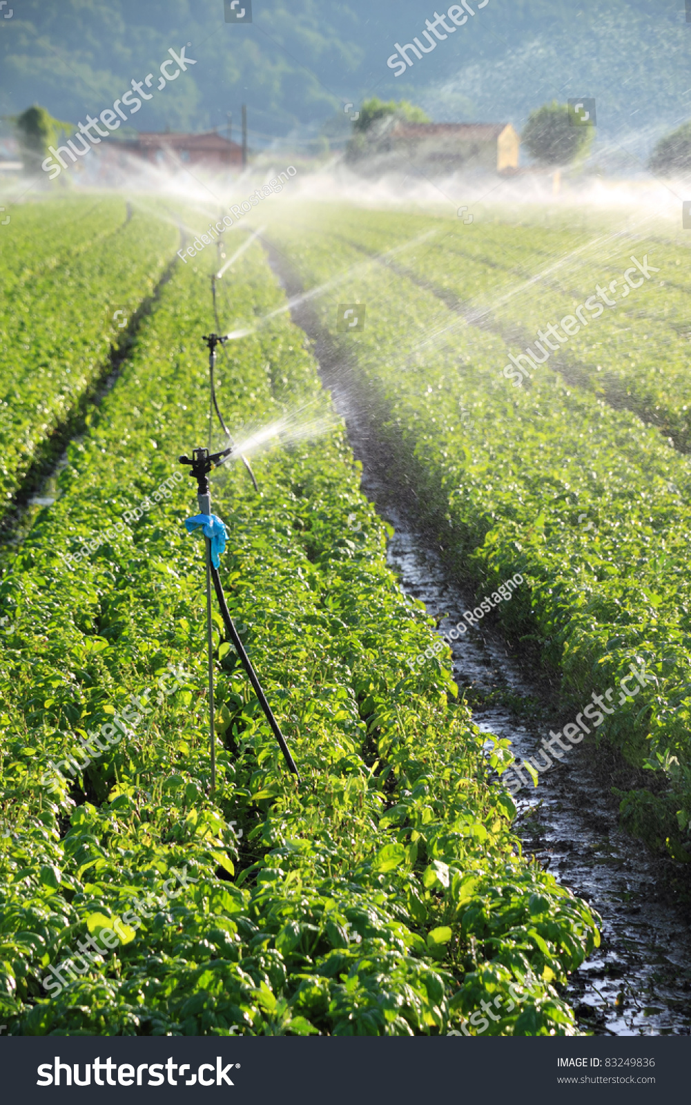 Irrigation System On Large Farm Field Stock Photo 83249836