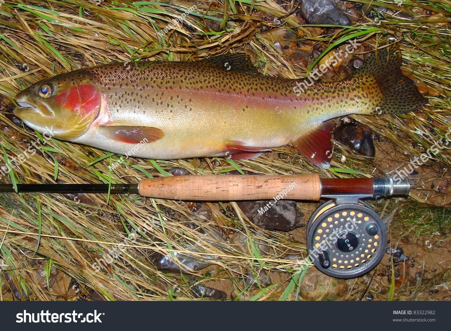Fly fishing for trout for White river fishing