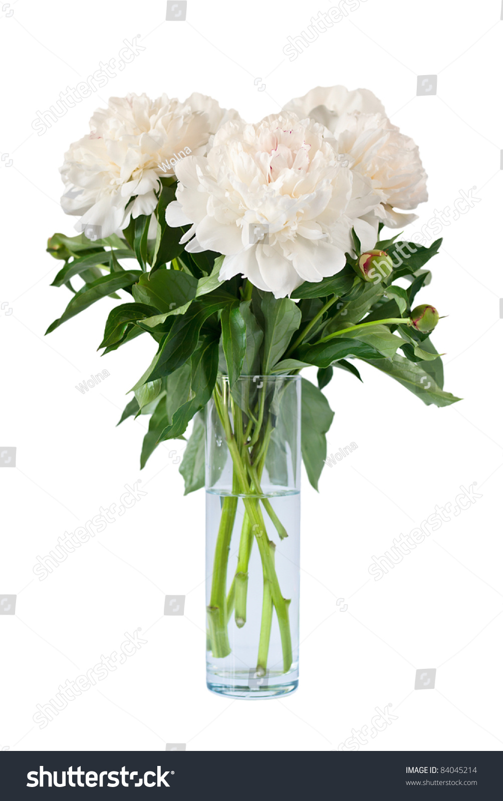 Beautiful White Flowers Peonies Vase Isolated Stock Photo Royalty