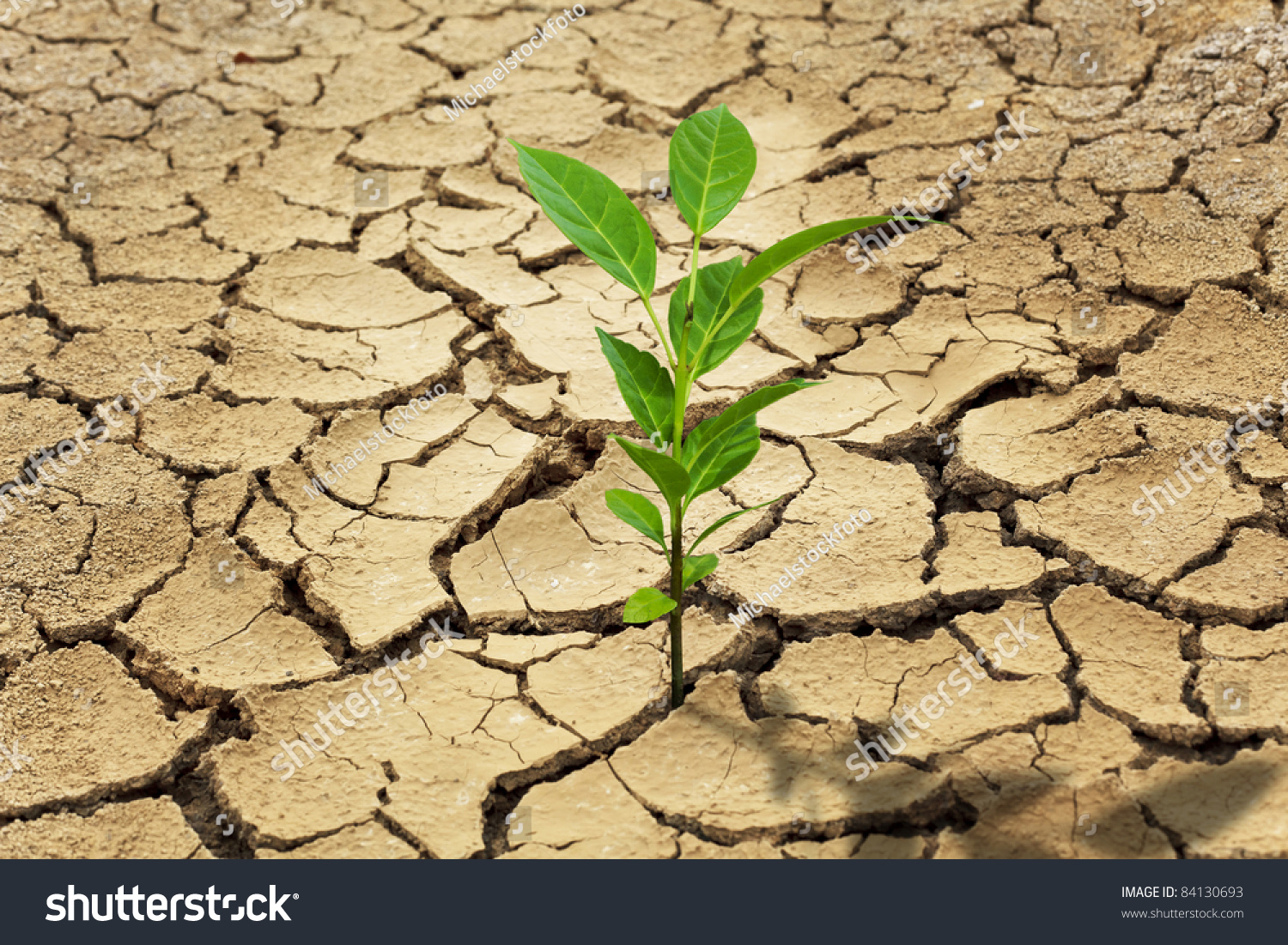 Seed And Dry Soil In Arid Areas Stock Photo 84130693 ...