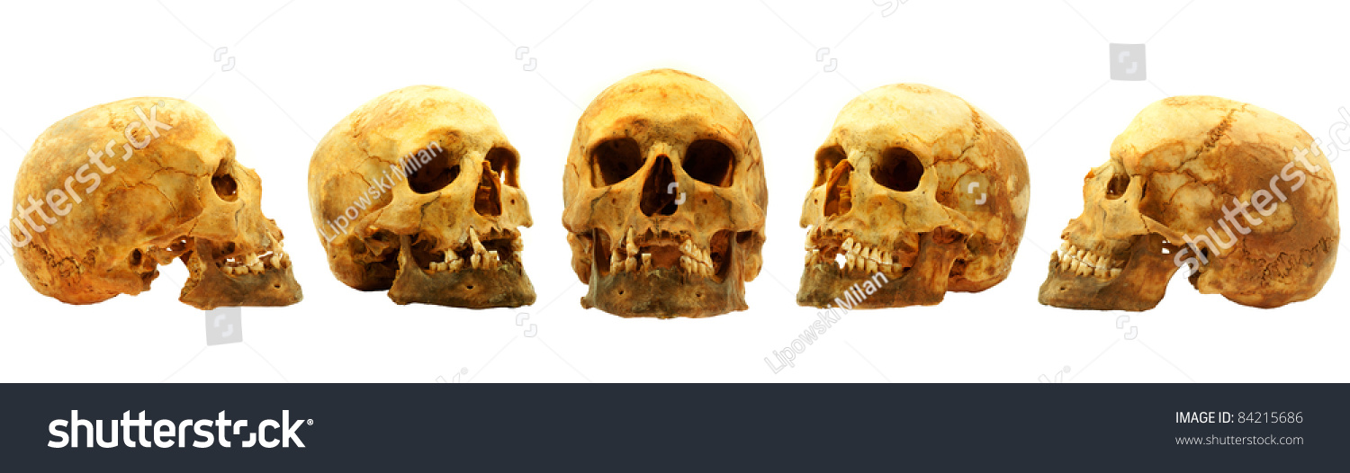 real human skull isolated on white background multi