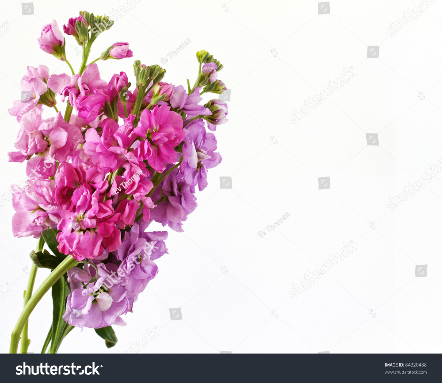 Brightly Colored Flowers Isolated On A White Background With Space