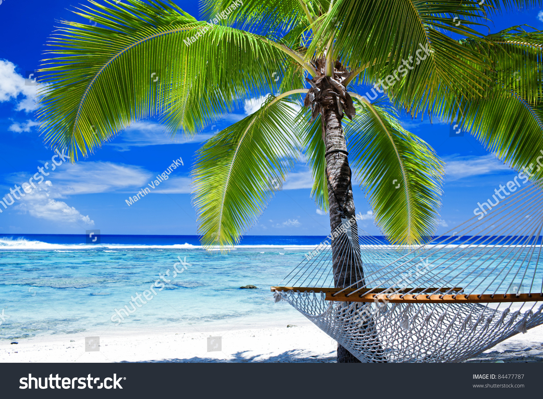 Empty Hammock Between Palm Trees On Stock Photo 84477787