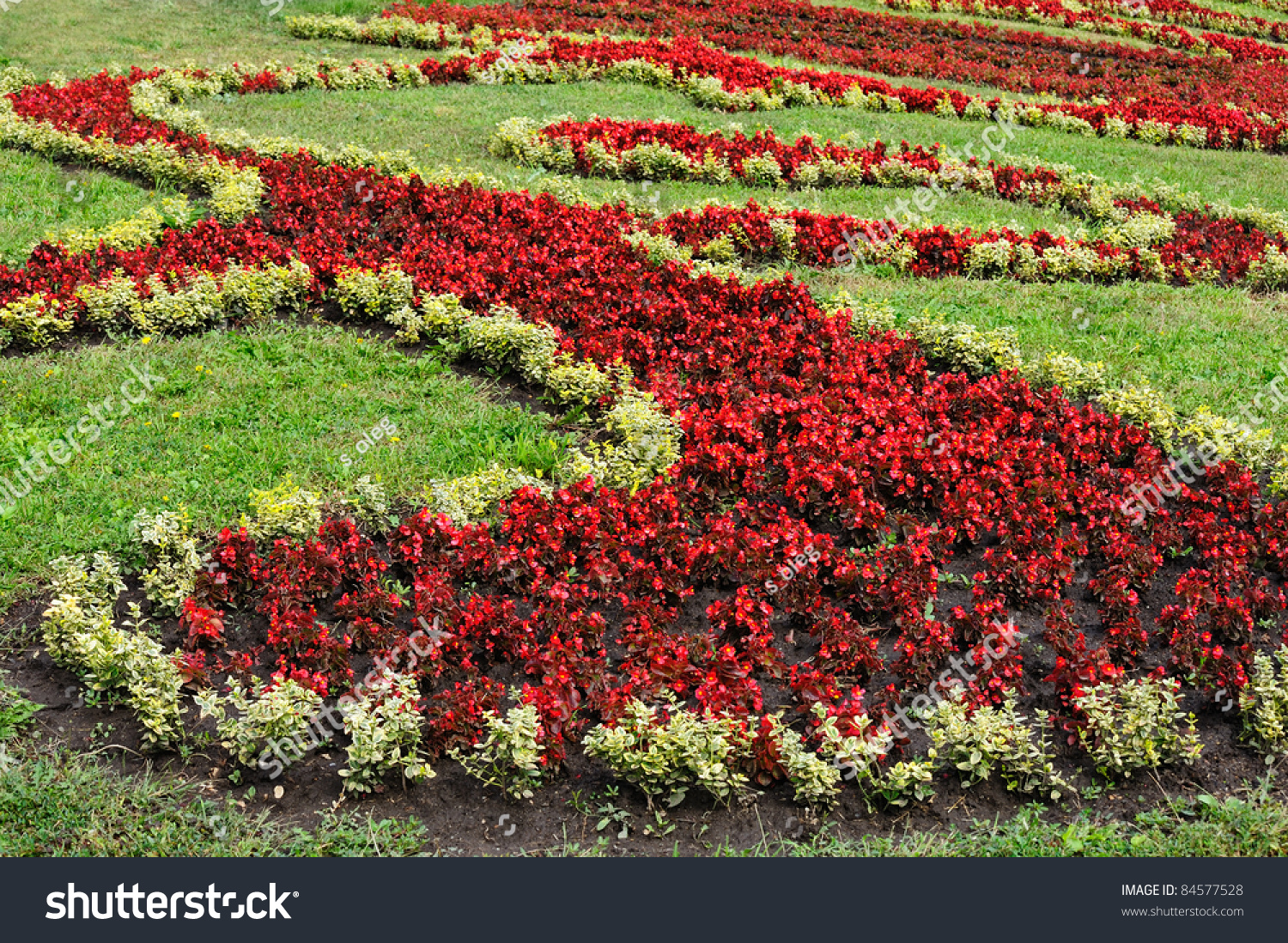 Ornamental grass with red flowers stock photo 84577528 for Ornamental grass with red flowers