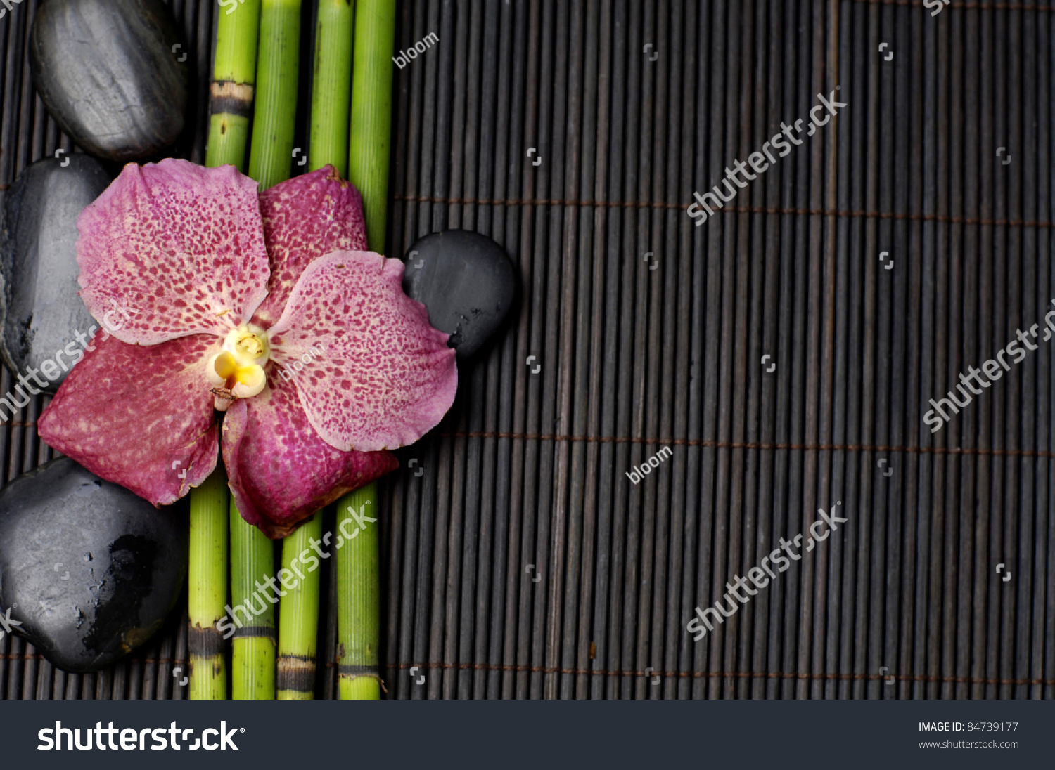 View Of Red Orchid With Thin Bamboo Grove And Stones On